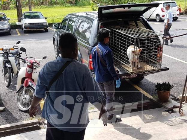 Portal Rasmi Pdt Kuala Langat Mdkl Serbu Kediaman Timbul Kacau Ganggu Kepada Penduduk